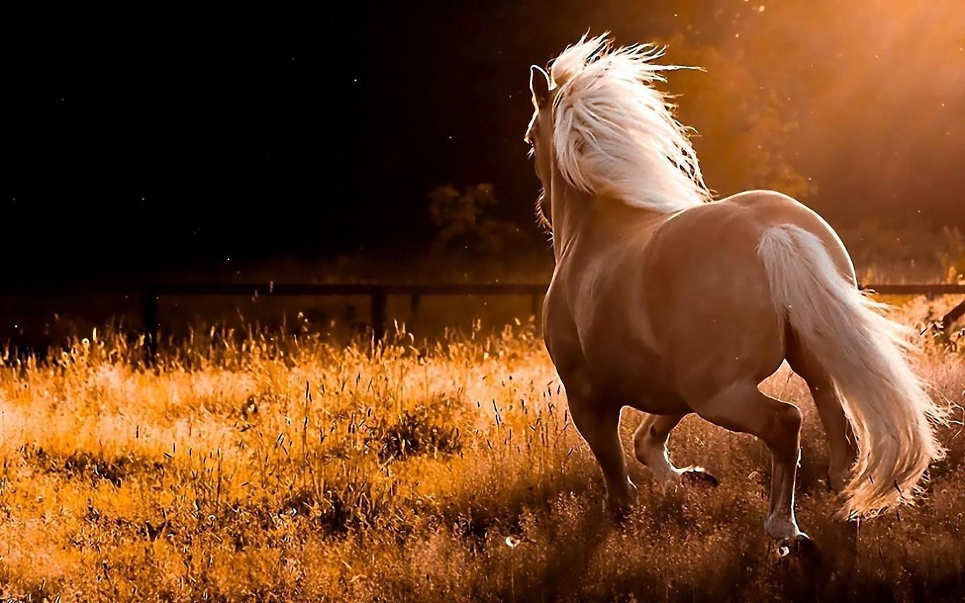 At Resimleri Siyah At Resimleri Beyaz At Resimleri 2016 Resim
